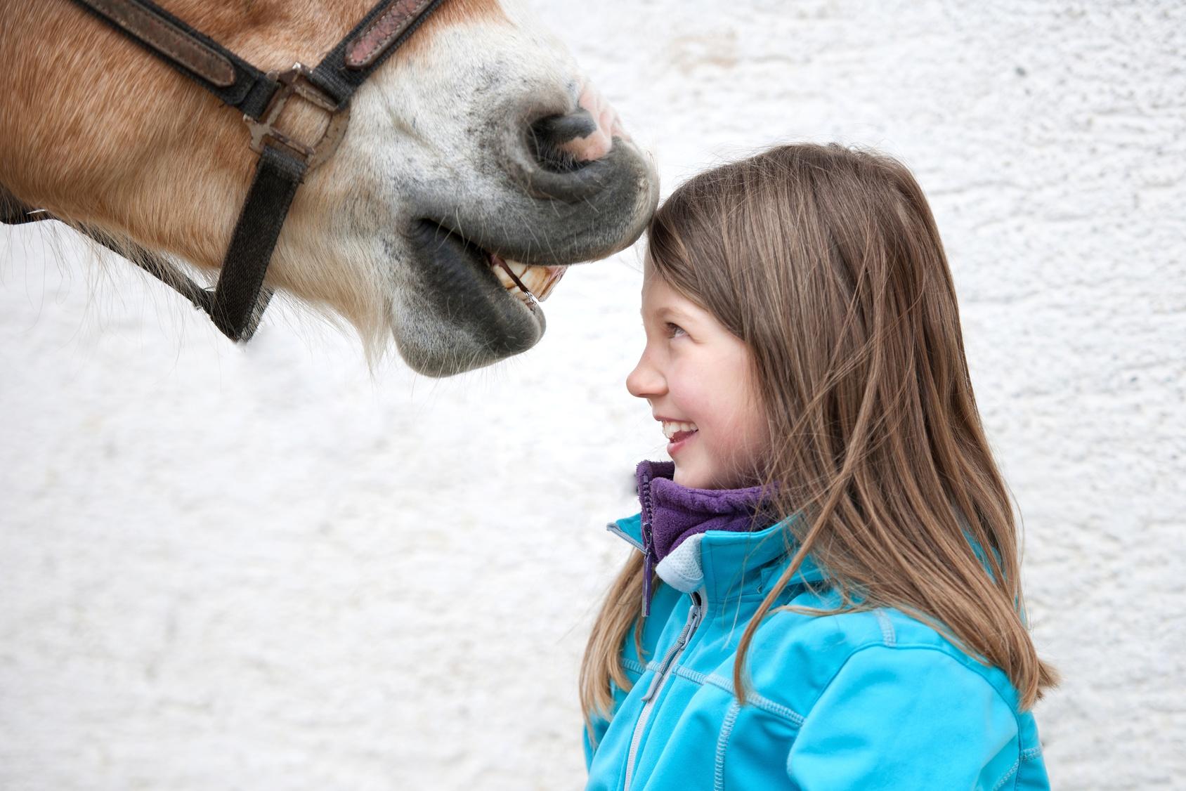 Pferde Wecken Unsere Grundbedürfnisse