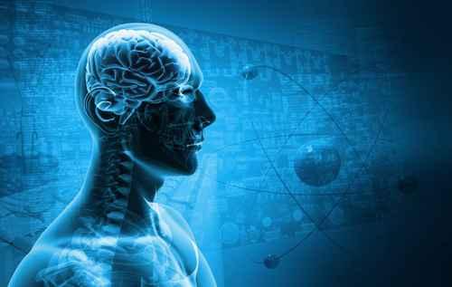 Das Gehirn (1): In Komplexität Nicht Zu überbieten