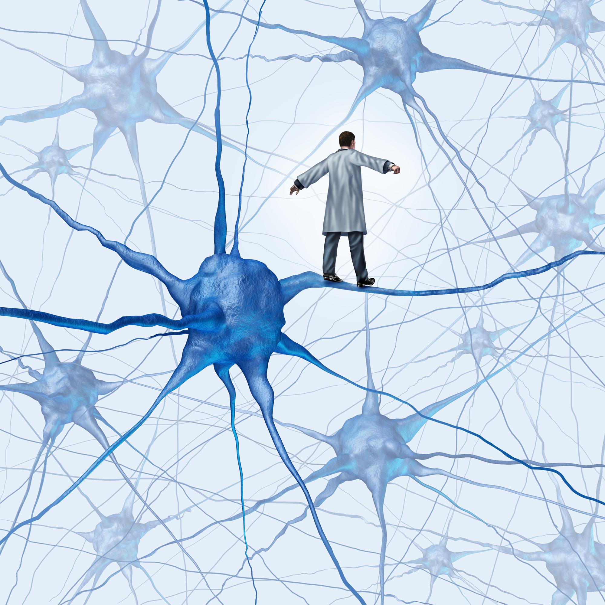 Das Gehirn (2): Vernetzte Steuerstelle – Faszien