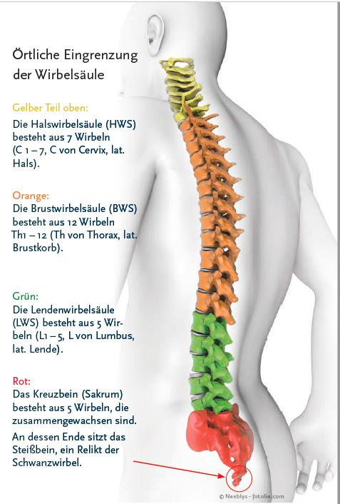 Alles Bandscheibe oder was? - Orthopäde Schwandorf Privatarztpraxis ...